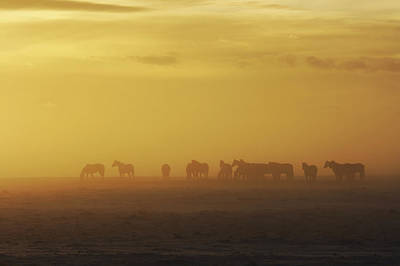 A Herd Of Horses In The Morning Fog Print by Roberta Murray