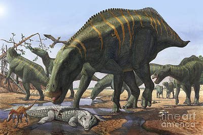 Reptiles Royalty-Free and Rights-Managed Images - A Herd Of Shantungosaurus Dinosaurs by Sergey Krasovskiy