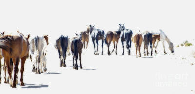 Photograph - A Herd Of Wild Horses On Navajo Indian Reservation  by Jerry Cowart