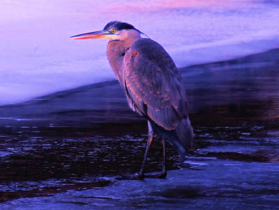 Yak Photograph - A Heron On The Moyie River by Jeff Swan