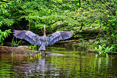Print featuring the photograph A Heron Touches Down by Eleanor Abramson