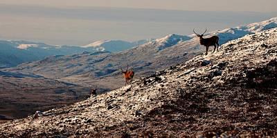 Photograph - A Highland Winter by Gavin Macrae
