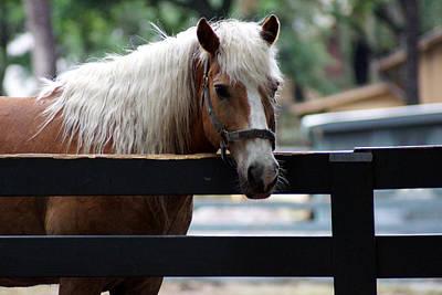 A Hilton Head Island Horse Art Print