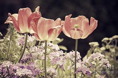 Duke Gardens Photograph - A Hint Of Blush by Emily Kay