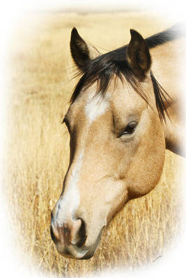 Photograph - A Horse by Ernie Echols