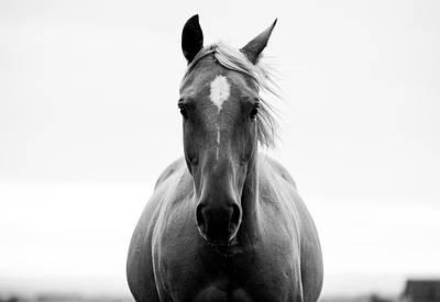 A Horse In A Field Art Print by Jordan Siemens