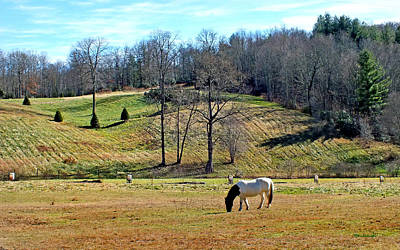 Photograph - A Horse Named Dipstick In Balsam Grove by Duane McCullough