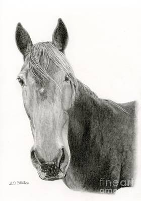 Greetings Card Drawing - A Horse Of Course by Sarah Batalka