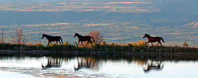 Photograph - A Horse Reflection by Eric Rundle