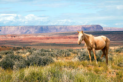 Red Dun Horse Photograph - A Horse With No Name by Nicholas Blackwell