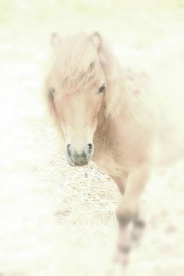 A Horse's Spirit Art Print by Karol Livote