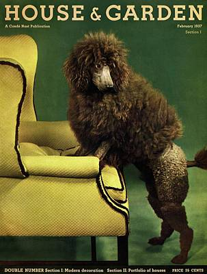 House Pet Photograph - A House And Garden Cover Of A Poodle by Anton Bruehl