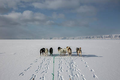 A Husky Dog Sled Team On The Sea Ice Art Print