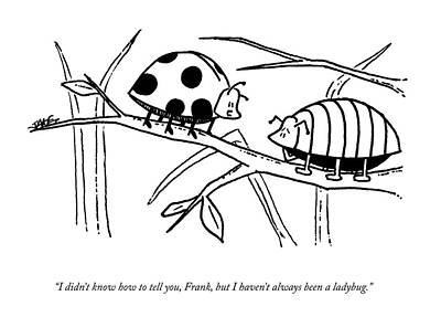 Ladybug Drawing - A Ladybug Speaks To A Beetle by Jake Goldwasser