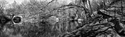 Photograph - A Lakeside Ramble by Cornelis Verwaal