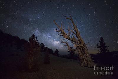 Photograph - A Large Bristlecone Pine by Dan Barr