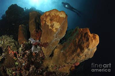 A Large Sponge With Diver Art Print by Steve Jones