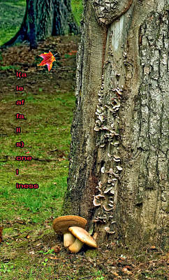 Toadstool Digital Art - A Leaf Falls...loneliness by Steve Harrington