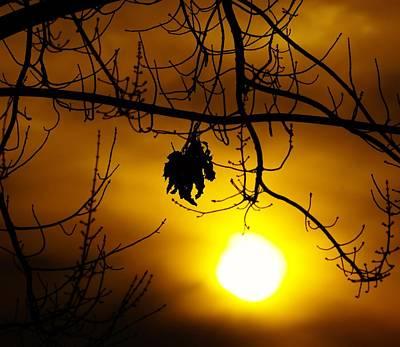 A Leaf Hanging On  Original