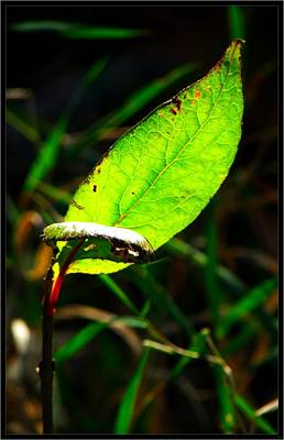 Photograph - A Leaf... by Tim Fillingim