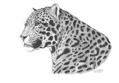 Drawing - A Leopard's Watchful Eye by Patricia Hiltz
