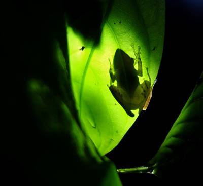 Peru Photograph - A Light Shines Through by Sarah Pemberton