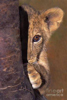 Art Print featuring the photograph A Lion Cub Plays Hide And Seek Wildlife Rescue by Dave Welling