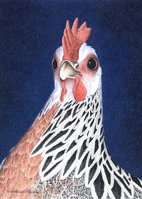 Chicken Drawing - A Little Arrogant by Katherine Plumer