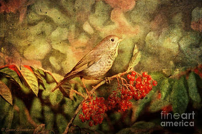 Avian Digital Art - A Little Bird With Plumage Brown by Lianne Schneider