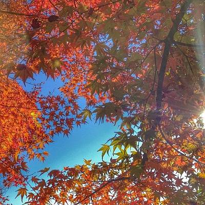 Nature Photograph - A Little Bit Of Sunshine On A Fall by Blenda Studio