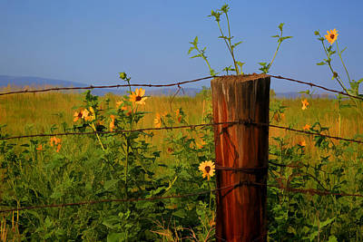 Barbed Wire Wall Art - Photograph - A Little Bit Of Yellow by Donna Kennedy