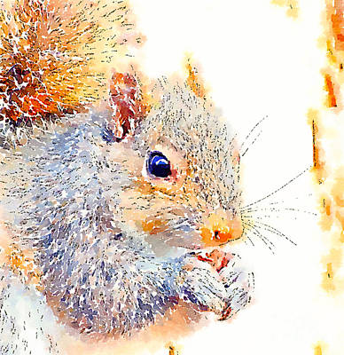 Photograph - A Little Bit Squirrely by Kerri Farley