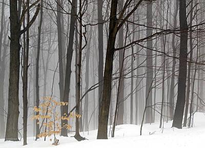 Photograph - A Little Color by Vickie Szumigala