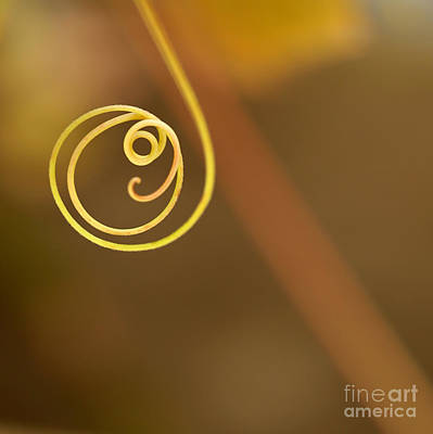 Photograph - A Little Curl by Sabrina L Ryan