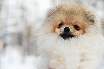 My Friend Photograph - A Little Cutie by Jenny Rainbow