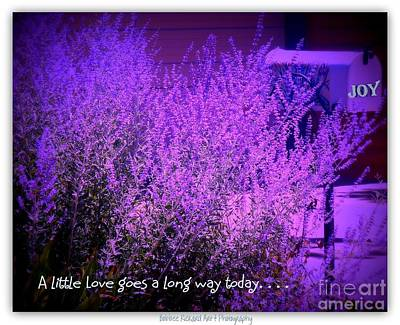Photograph - A Little Love by Bobbee Rickard