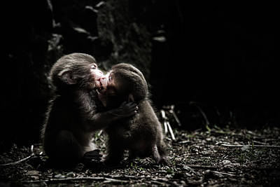 Monkey Wall Art - Photograph - A Little Love Story by Takeshi Marumoto