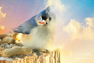Tufted Titmouse Photograph - A Little Piece Of Heaven by Tina  LeCour