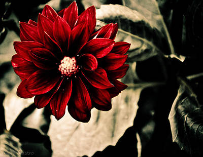 Photograph - A Little Red by Cindi Castro
