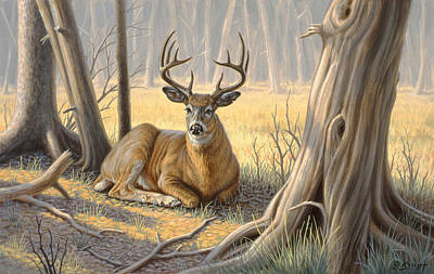 Whitetail Deer Painting - 'a Little Shade' by Paul Krapf