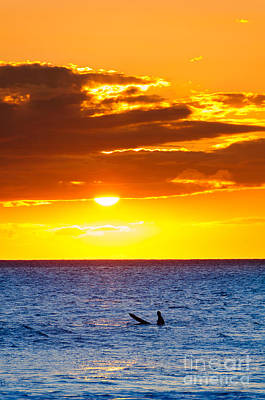Photograph - A Lone Surfer At Sunset Maui Hawaii Usa by Don Landwehrle