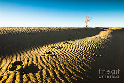 Desert Landscape Photograph - A Lone Tree On A Sand Dune by Ellie Teramoto