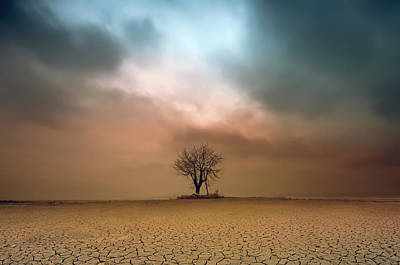 Lonely Tree Wall Art - Photograph - A Loner ... by Piotr Krol (bax)