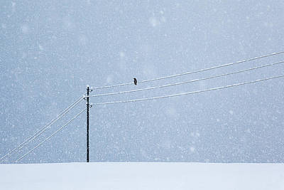 Crow Photograph - A Long Day In Winter by Uschi Hermann