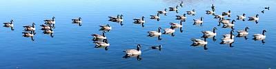 A Lot Of Geese Original