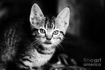 Kitten Photograph - A Lot On The Mind by Kayne  Johnson