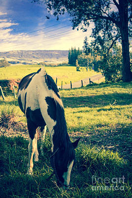 Photograph - A Lovely Horse Browsing On Olinda Road Maui Hawaii by Sharon Mau
