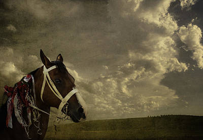 Digital Art - A Lovely Horse by Eduardo Tavares