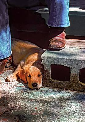 Puppy Photograph - A Man And His Dog by Steve Harrington
