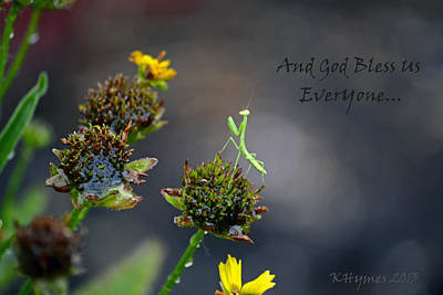 Photograph - A Mantis Prayer by Kim Hymes